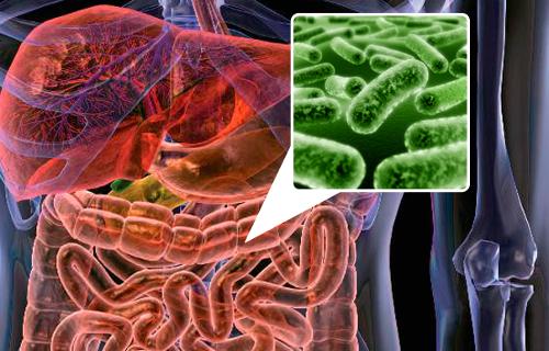 1227-dicas-para-melhorar-a-flora-intestinal-01